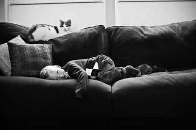 MSD Nobivac Case Study Sofa