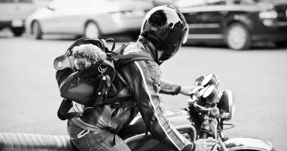 MSD Nobivac Case study Motorcycle